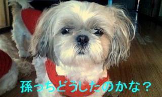 mint_20071124_3