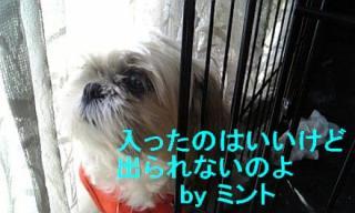 mint_20071125_4