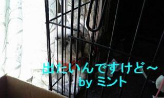 mint_20071125_2
