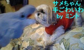 mint_20071127_5