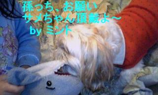 mint_20071127_6