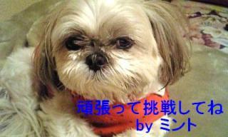 mint_20071129_2