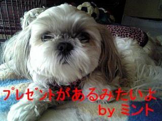 mint_20071202_3