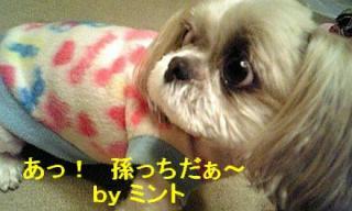 mint_20071206_1