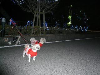 irumi_20071210_4