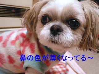 mint_20071213_1