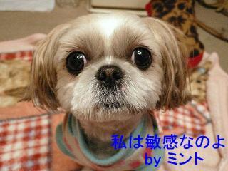 mint_20071213_3