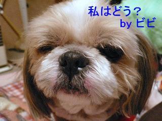 bibi_20071213_1