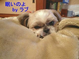 love_20071228_1