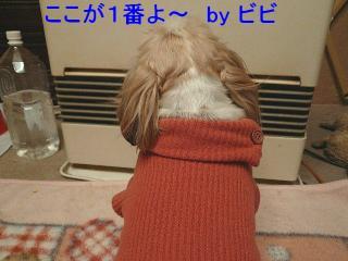 bibi_20071228_1