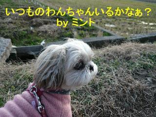 mint_20080101_4