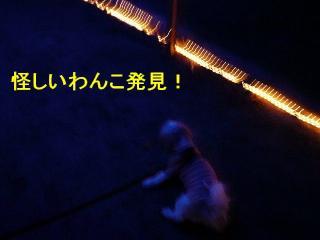 irumi_20080109_5
