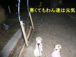 irumi_20080109_6
