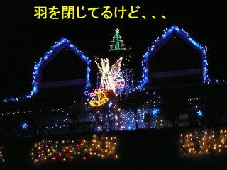 irumi_20080109_13