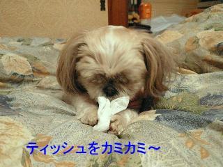 mint_20080113_1