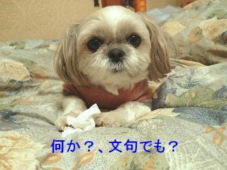 mint_20080113_3