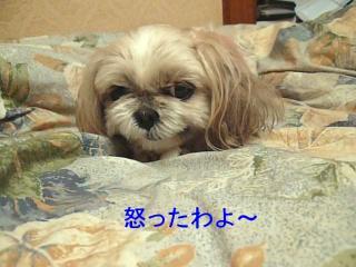 mint_20080113_5