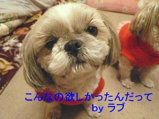 love_20080111_1