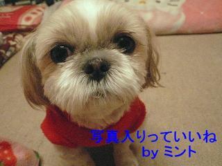 mint_20080111_1
