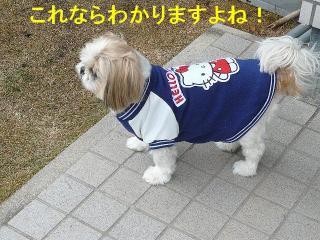photo_20080303_3