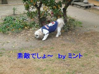 mint_20080112_2