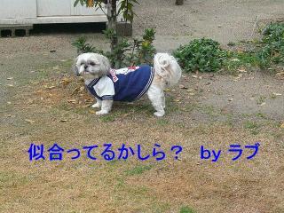 love_20080112_1