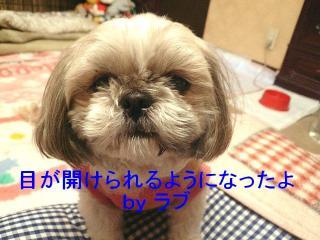 love_20080121_1