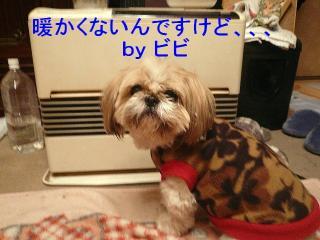 bibi_20080122_2