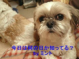 mint_20080125_1
