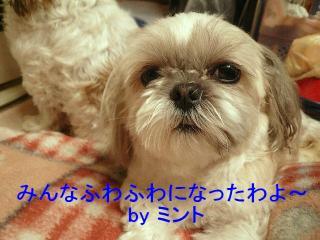 mint_20080125_3