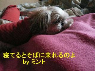 mint_20080126_1