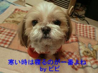 bibi_20080126_1