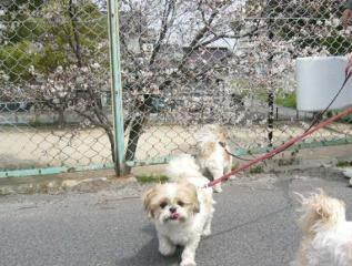 oyako_20060409_2