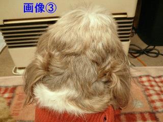 gazou_20080128_3
