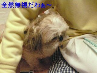 love_20080204_3