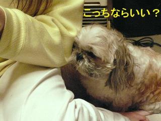 love_20080204_6