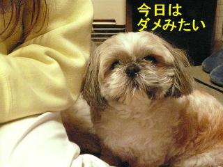 love_20080204_7