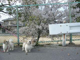 oyako_20060416_1
