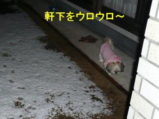 mint_20080203_1
