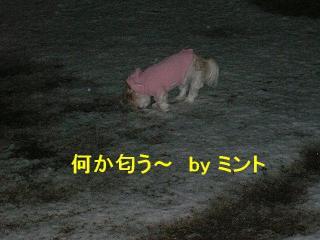mint_20080203_6