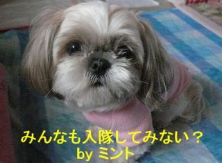 mint_20080207_1