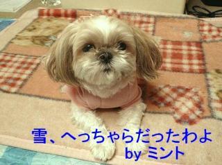mint_20080203_7