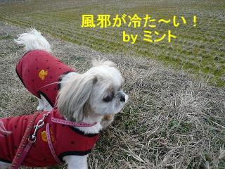 mint_20080211_1