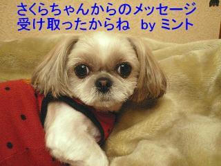 mint_20080209_1