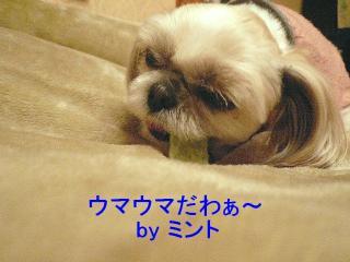 mint_20080213_2
