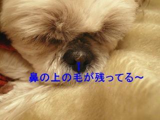 mint_20080216_1