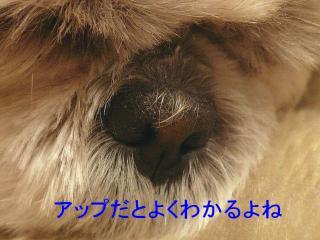 mint_20080216_2