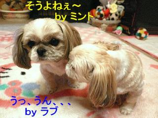 lovemint_20080222_2