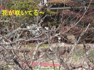 hana_20080224_1