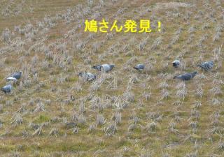 tori_20080224_1